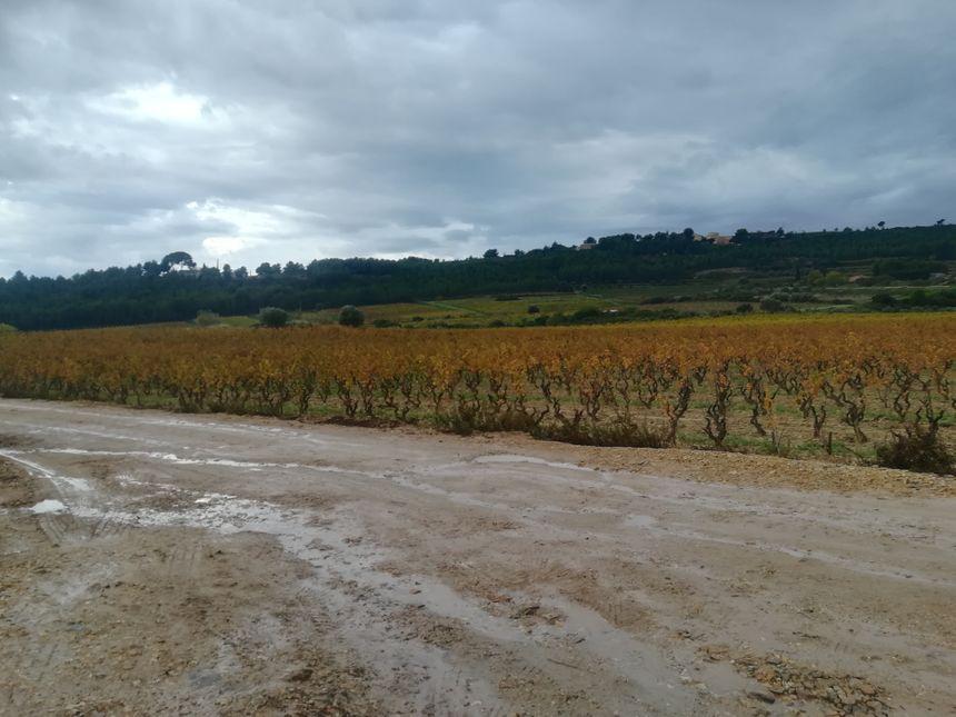 La décharge est située en plein milieu de l'appellation AOC Bandol. Les vignes du propriétaire du terrain agricole ont d'ailleurs été déclassées