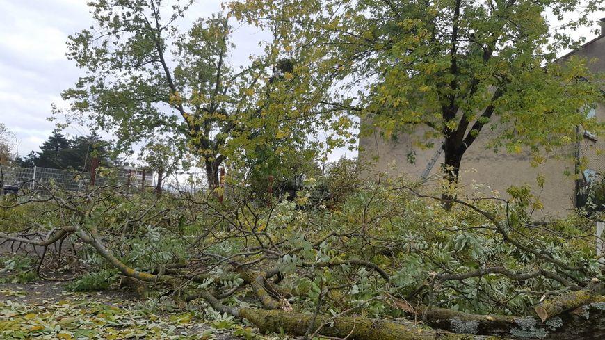 Des milliers d'arbres ont été endommagés après les fortes chutes de neige à Valence (Drôme)