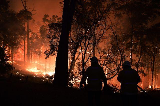 Les flammes ravagent des hectares de forêt.