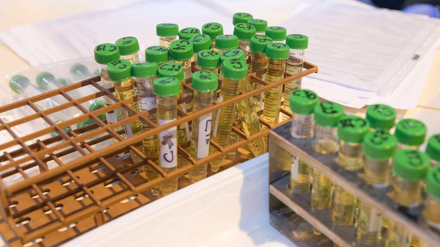 Glyphosate : 28 plaintes déposées au tribunal d'Avesnes-sur-Helpe - France Bleu