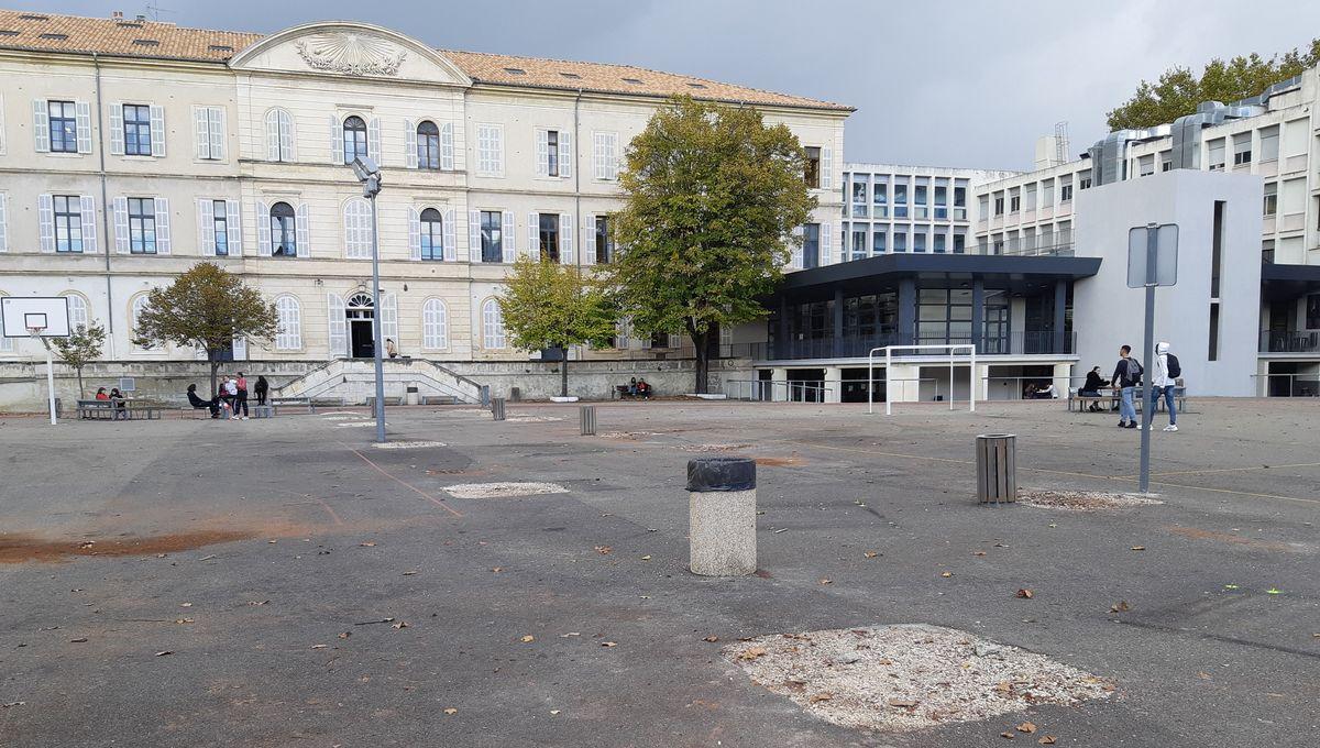 Presque tous les platanes du lycée Aubanel à Avignon ont été abattus