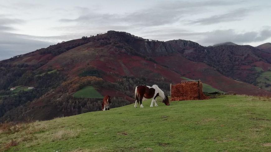 Poste de rabatteur, situé sur une colline en face du col de Lepeder