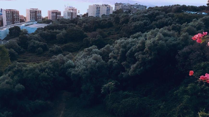 Le parc de la Pietrina, qui s'étend sur quatre hectares, situé juste au-dessus du lycée Laetitia