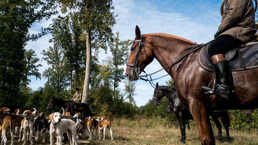 La chasse à courre se pratique avec des chiens et des chevaux.