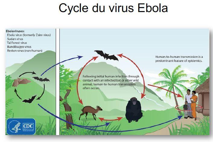 Ebola : une épidémie après l'autre