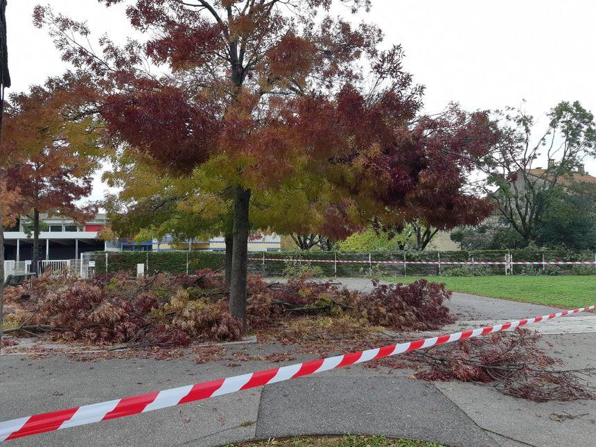 Des milliers d'arbres endommagés après les fortes chutes de neige à Valence (Drôme)