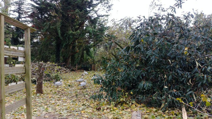 Des branches d'arbres sont tombées dans les enclos au zoo d'Upie.