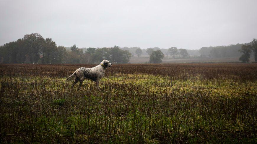 La chasse à courre s'est déroulée ce samedi 23 novembre 2019 en forêt d'Avaugour (photo d'illustration).