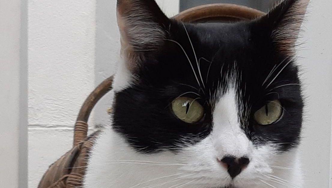 La propriétaire de 32 chats dépassée dans les Vosges