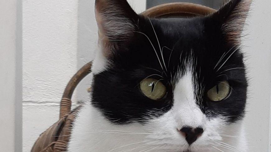 Noir et blanc, roux, écaille de tortue… pas moins de 27 chats sont proposés à l'adoption. Photo d'illustration.