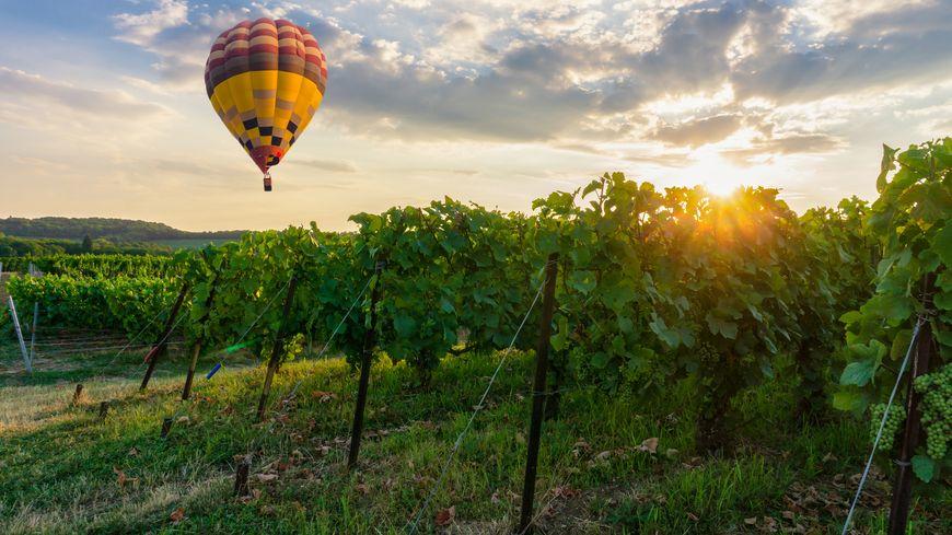 Une montgolfière au dessus des vignes