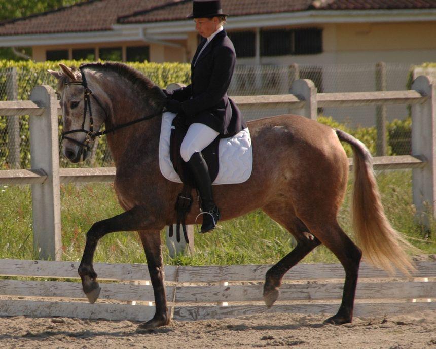 Célia Le Corre, éleveuse de chevaux à Labrit.