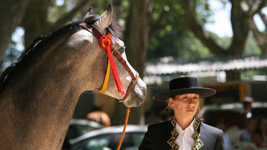 Célia Le Corre, éleveuse de chevaux espagnols à Labrit.