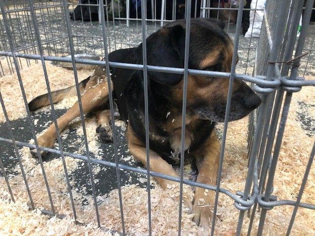 Plus de 300 chiens et chats attendent une nouvelle famille après avoir été abandonnés.