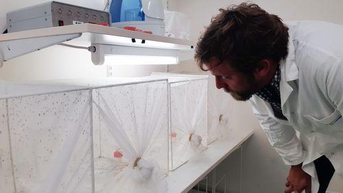 La lutte contre le moustique tigre vecteur de maladies tropicales