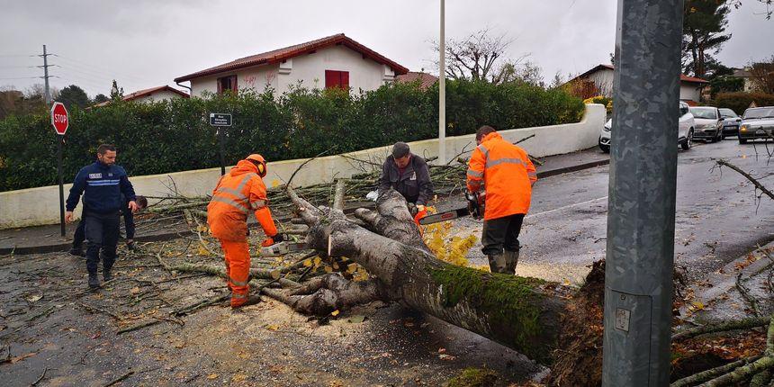 A Bayonne des arbres sont tombés et ont dû être dégagés par les services municipaux