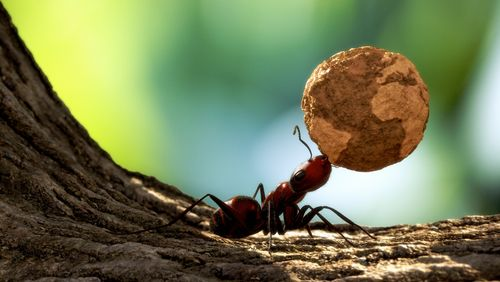 Personnalité des insectes, fermes robotisées et traitement des maladies coronariennes