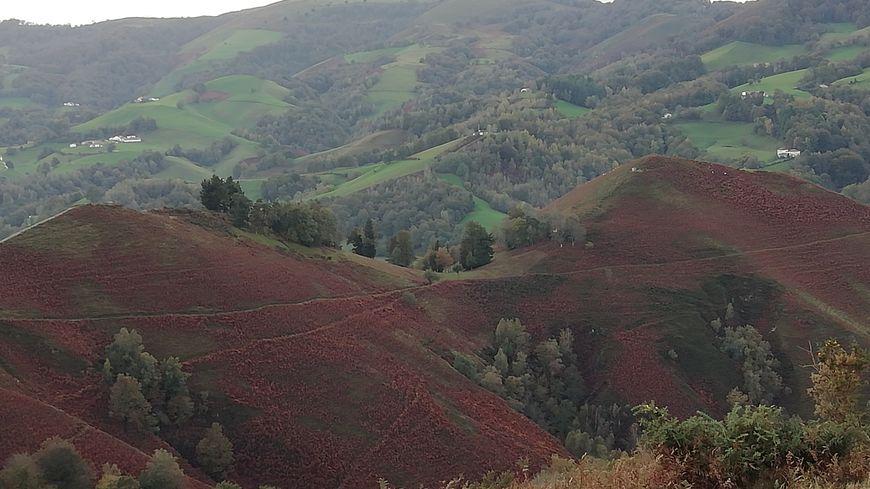 Col de Lepeder aux Aldudes, vu des postes avancés des rabatteurs : ils dirigent les palombes vers le col, où sont tendus les filets, entre les arbres