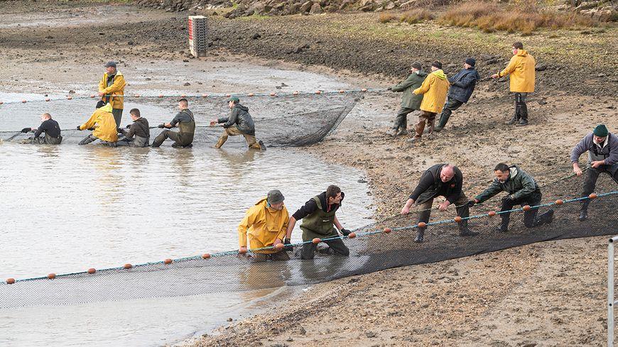 Les pêcheurs ont éprouvé des difficultés inhabituelles pour sortir les filets compte tenu de la hauteur d'eau et de vase