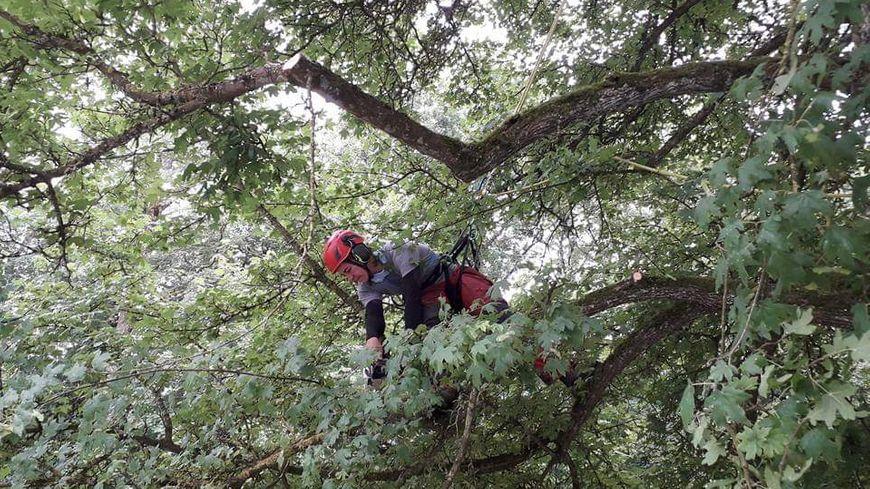Un travail au cœur des arbres
