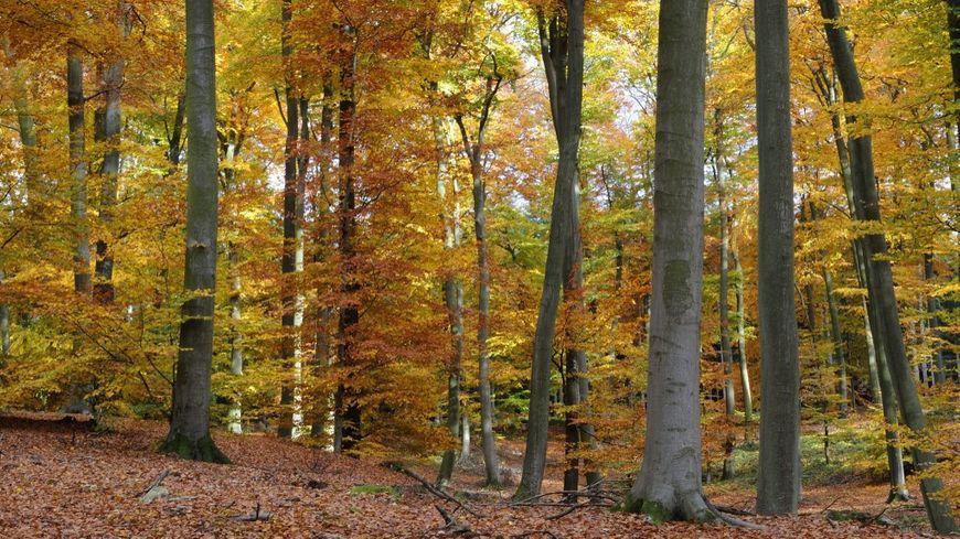 La forêt de Retz, dans l'Aisne, où le corps de la femme enceinte a été retrouvé le 16 novembre 2019