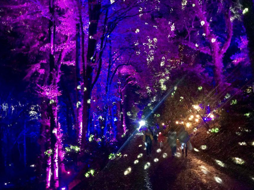 Les illuminations des allées du domaine