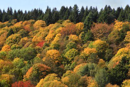 La forêt française se meurt