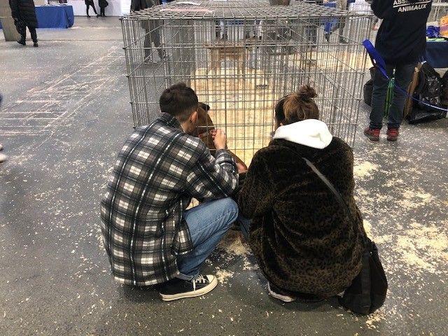 Les futures familles prennent le temps de bien choisir leur animal et de repartir avec leur coup de cœur.