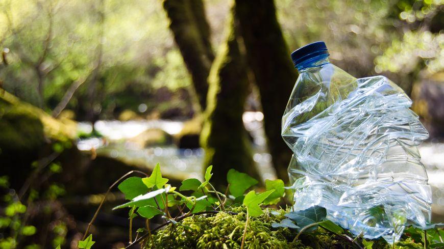 Une bouteille plastique jetée dans une forêt