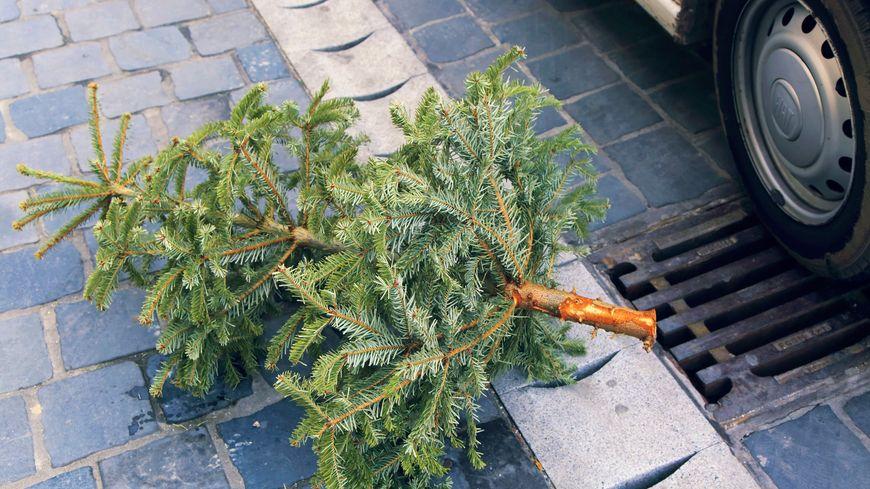 Les sapins de Noël seront prochainement collectés par les communes.