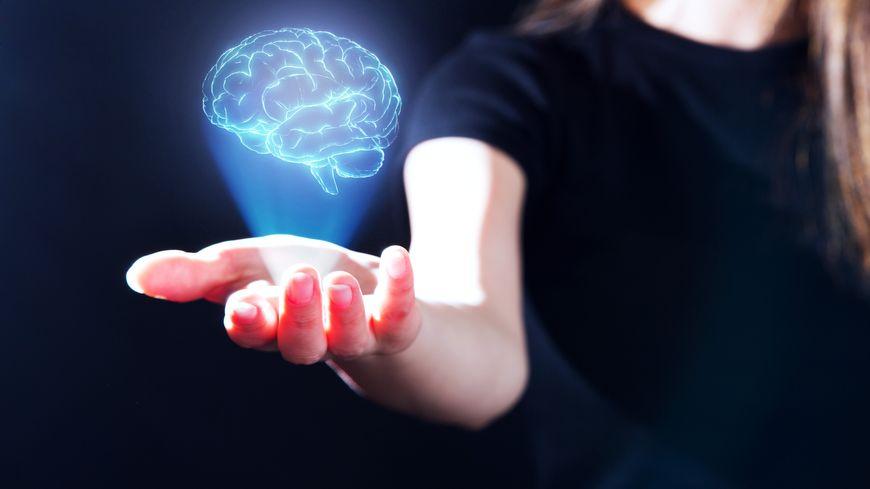 Les cerveaux féminins et masculins ne montrent pas de différence naturelle.