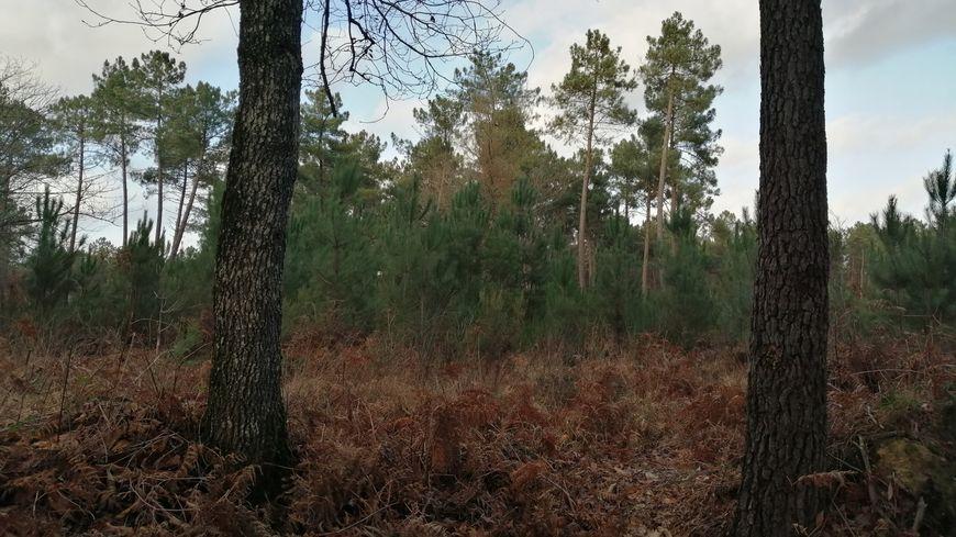 A Beaumont-la-Ronce, 30 hectares de forêt ont été dévastés par la tempête de 1999