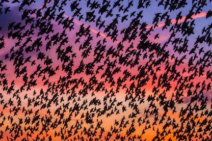 421 millions d'oiseaux ont disparu en moins de 30 ans en Europe.