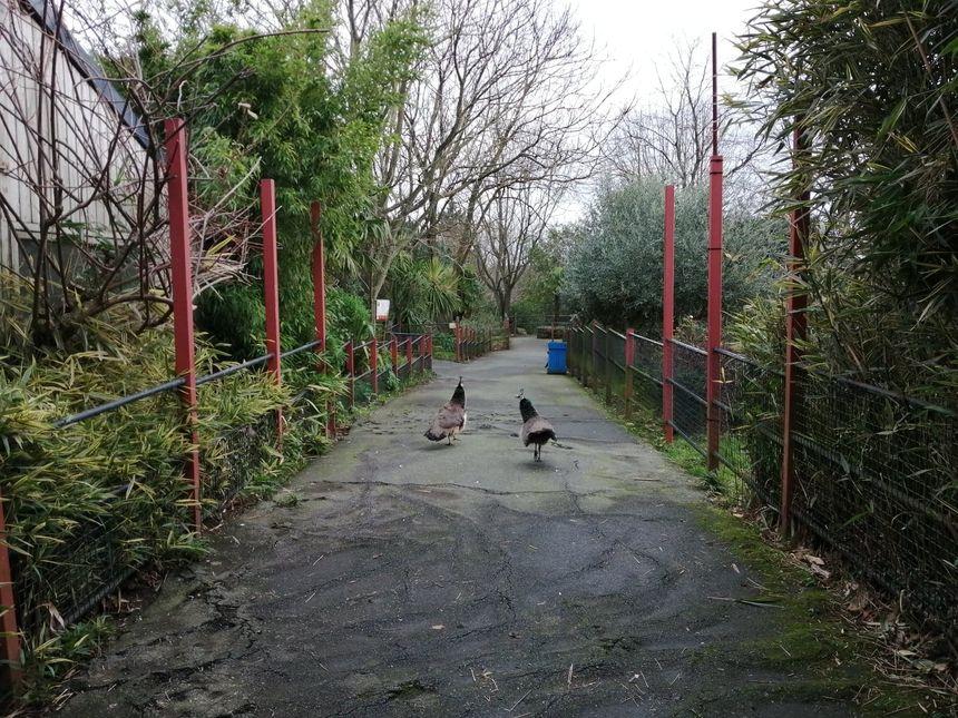 Les allées du zoo de Pont-Scorff sont désormais désertes... ou presque