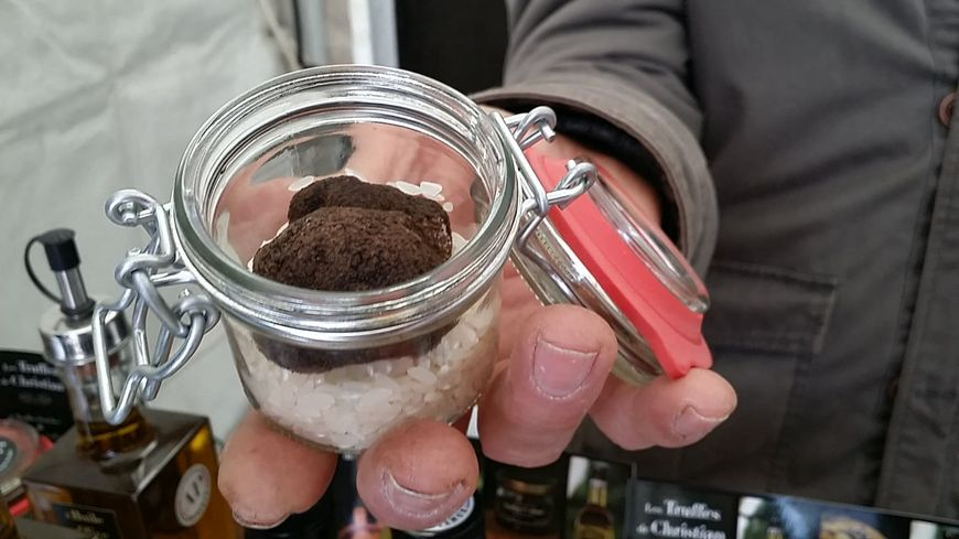 La truffe noire se négocie entre 900 à 1200 euros le kilo dans le Gard