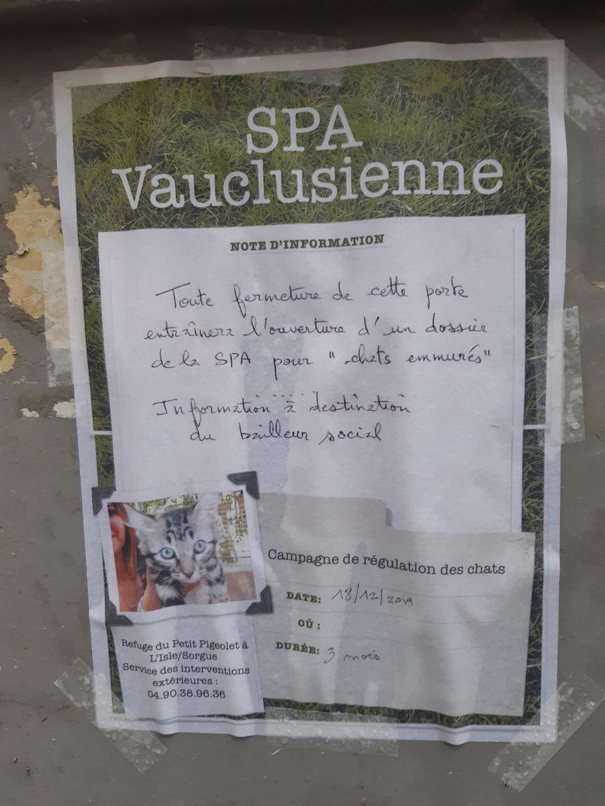 La SPA Vauclusienne a pris les devants pour éviter que chats ne se retrouvent complétement enfermés