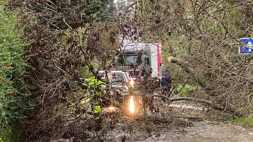 L'arbre était en travers de la route sur la départementale 75 (illustration)