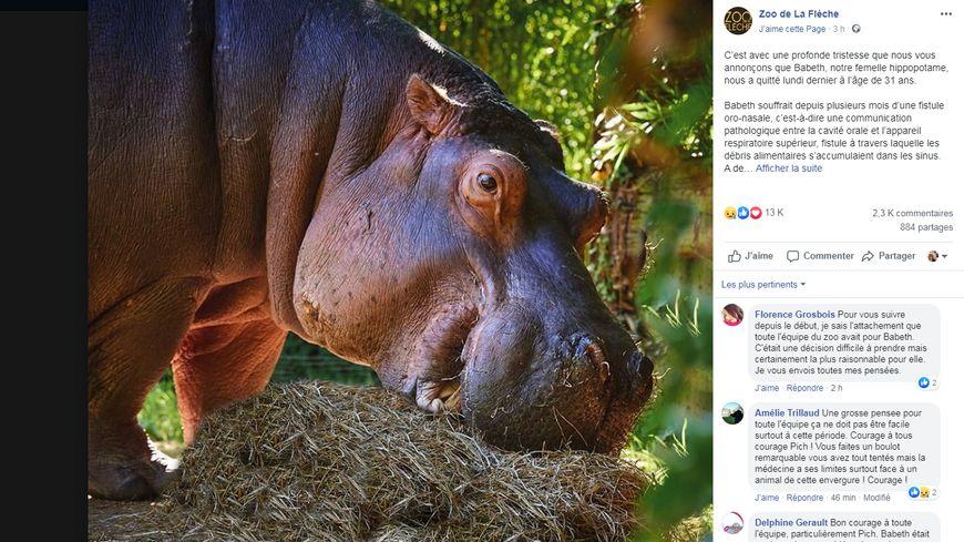 """Babeth, hippopotame femelle du zoo de La Flèche (Sarthe), était une figure de l'émission """"Une saison au zoo"""" de France 4"""