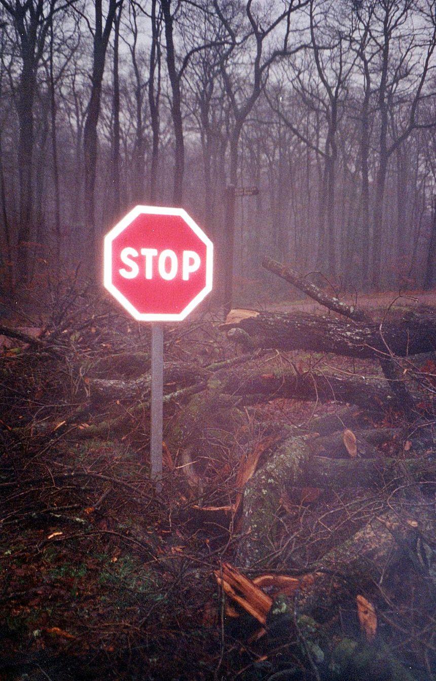 Les dégâts de la tempête de 1999 sur un chemin forestier en forêt de Bercé