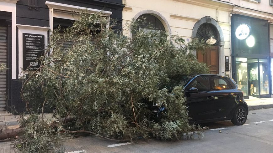 Le vet a arraché de nombreux arbres y compris dans le centre-ville de Bastia