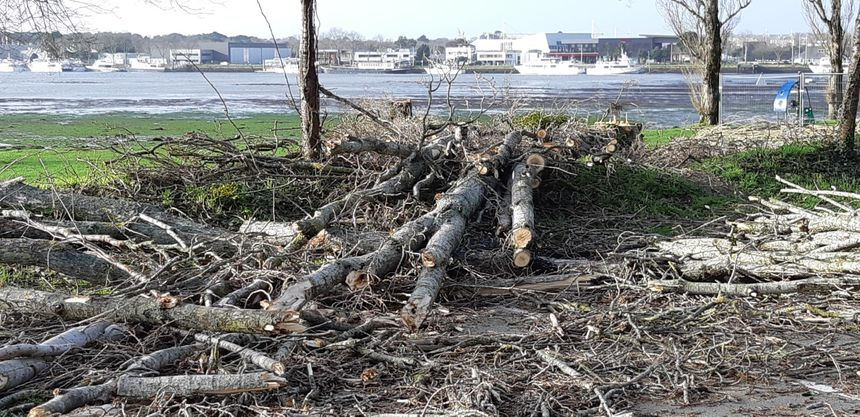 Les arbres tombés ou abattus sont découpés