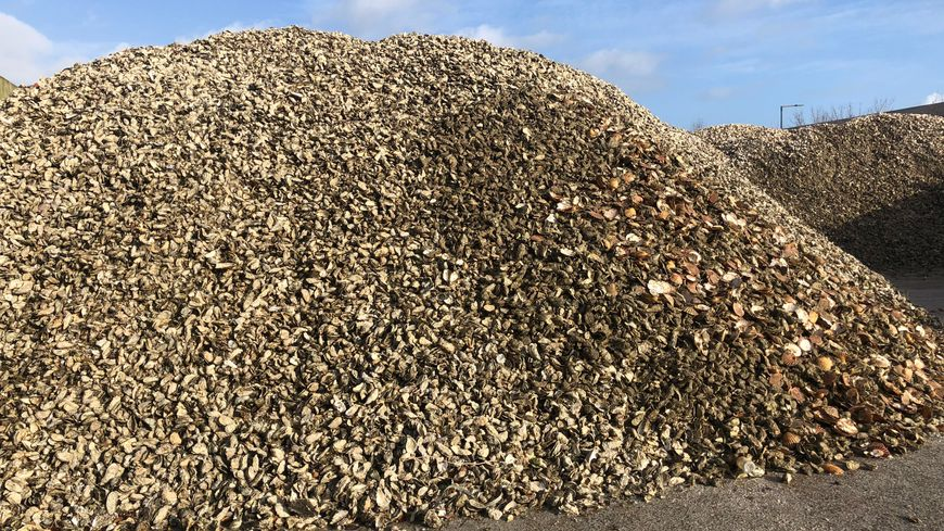 """L'entreprise """"Ovive"""" à Périgny recycle et revalorise les coquilles d'huîtres"""