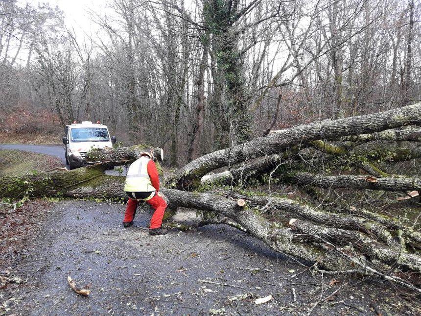 Un chêne de 20 centimètres de diamètre bloque la route départementale 13 à Saint-Géraud-des-corps