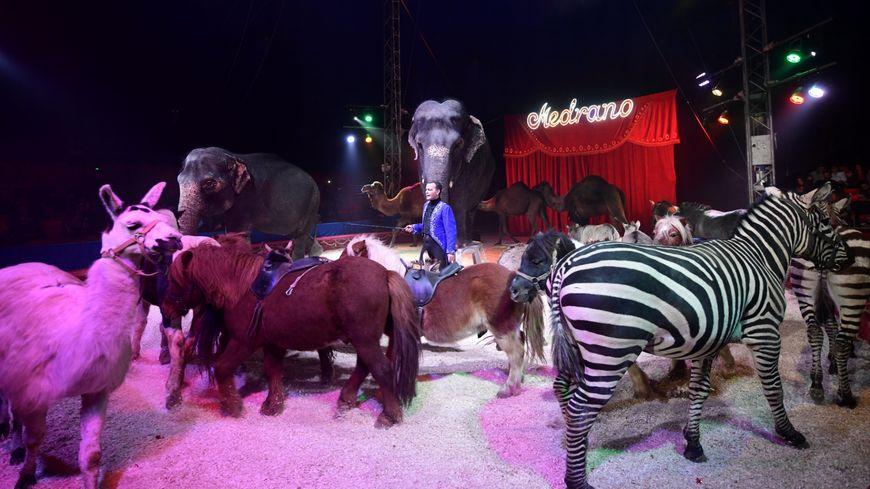 Le cirque Medrano à Marseille début décembre 2019