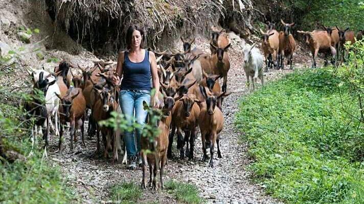 Noémie Collet, avec ses chèvres.