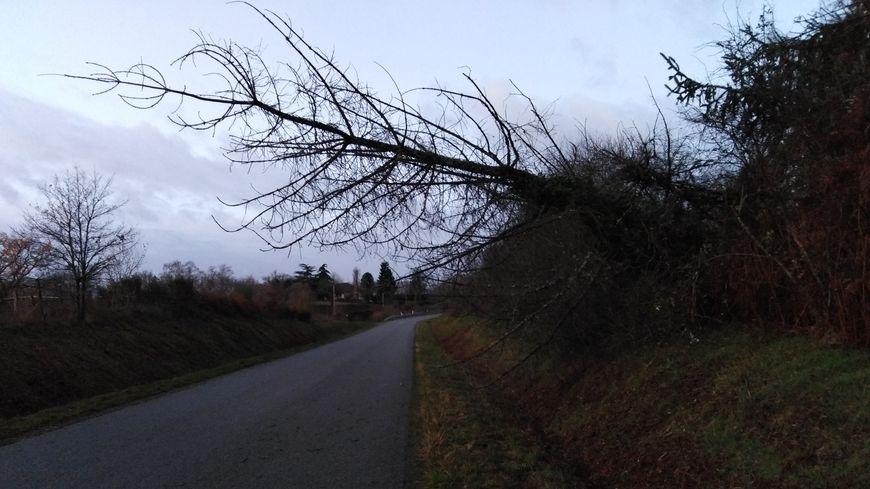 Un arbre penché sur la route, vers la commune de Saint-Priest-la-Feuille