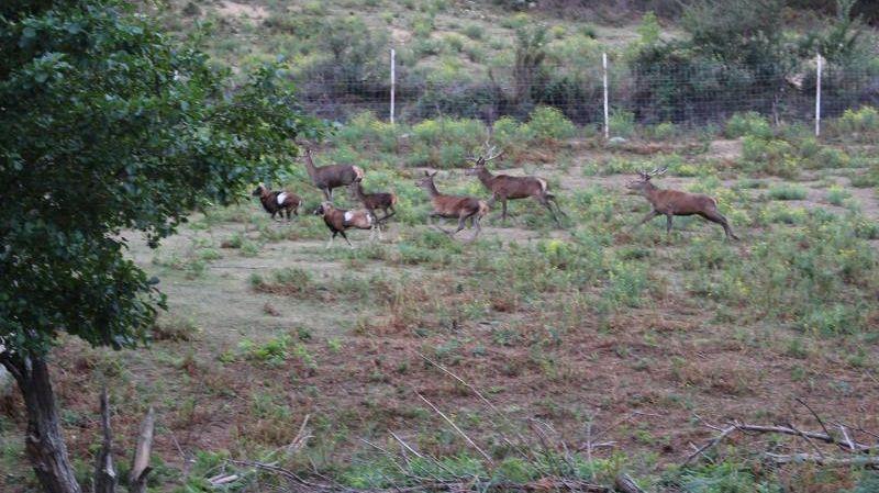 La propriété de Luc Besson à la La-Trinité-des-Laitiers dans l'Orne abrite une centaine de cerfs.