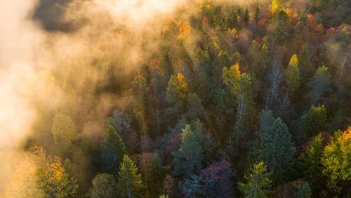 Evapotranspiration : les arbres ont-ils fini d'en suer ?