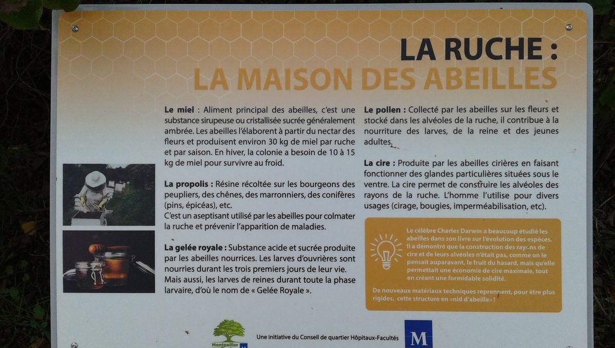 Des panneaux pédagogiques pour tout savoir sur les abeilles à Montpellier.