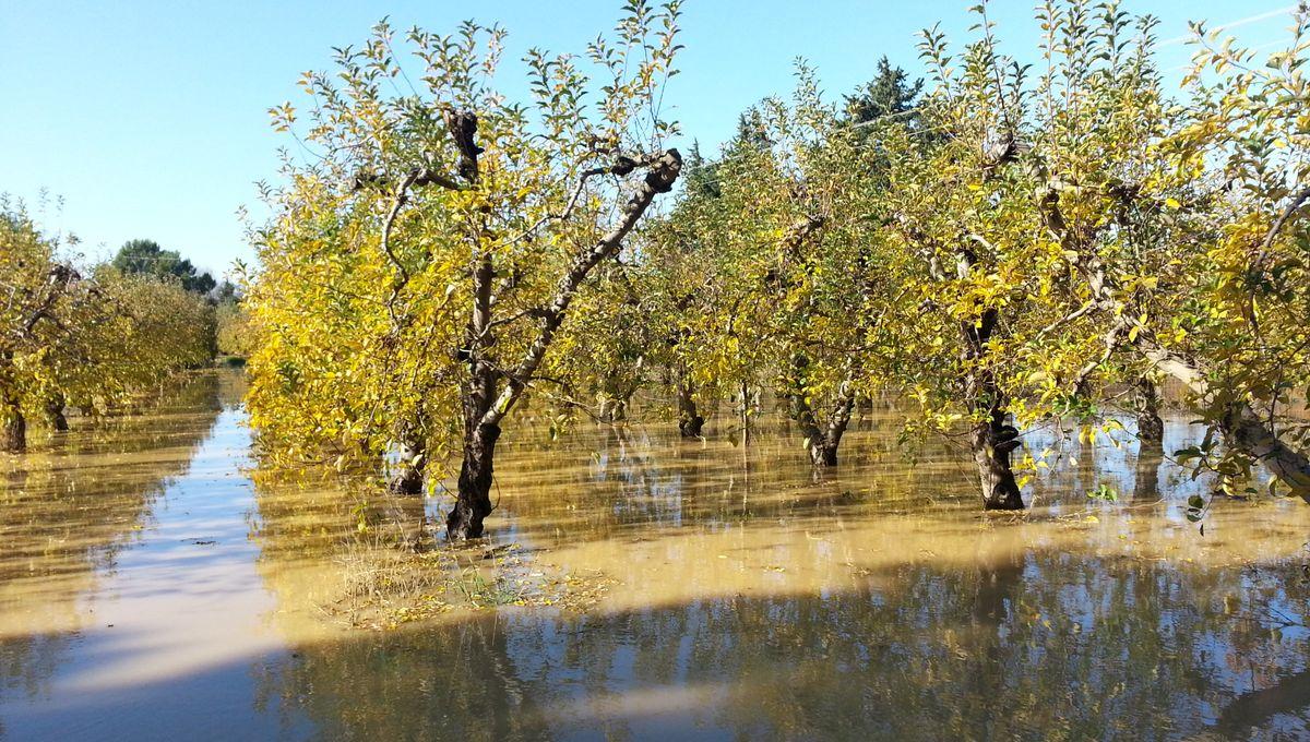 PHOTOS - vergers et entreprises inondées à Cavaillon